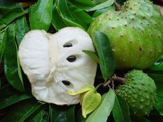 Soursop (Guanabana) The flavour has been described as a combination of strawberry and pineapple, with sour citrus flavour and creamy flavour reminiscent of coconut or banana. In the Dominican Republic is very common to make a champola, which is a refreshing drink of the guanabana.  Health-benefits-of-Soursop : Soursop is  referred to as custard apple, graviola or even Brazilian paw paw. Reports have shown it cures cancer more effectively than chemotherapy, also many ailments.