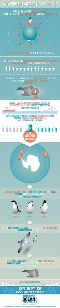 To celebrate World Oceans Day we are releasing the first in a series of inforgraphics demonstrating why we need to protect Antarctica's ocean. Head to our website www.antarcticocean.org and Join The Watch!