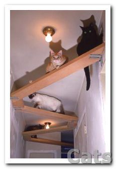 If only my #cats could see this. On second thought probably.