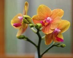Google Image Result for http://roguebride.com/wp-content/uploads/2012/02/pink-and-orange-orchid.jpg