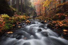 "Autumn Stream - under a maple tree in the Bohemian Switzerland.  <a href=""http://www.facebook.com/pages/Tobias-Richter-Photography/163099510390531"">Follow me on FACEBOOK</a> <a href=""https://www.instagram.com/richterphotographie/"">Follow me on Instagram</a>  <a href=""http://www.richterphotographie.de"">www.richterphotographie.de</a>"