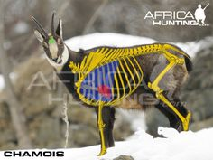 Shot Placement Africa Hunting, Boar Hunting, Animal Games, Owl, Bird, Weapons Guns, Archery, Owls, Birds