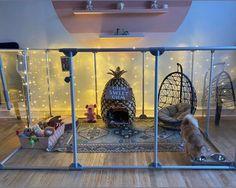 Lookbook Rabbit Pen, Pet Rabbit, Pet Bunny Rabbits, Bunnies, Rabbit Enclosure, Bunny Room, Dog Playpen, Indoor Rabbit, Bunny Cages