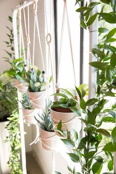 DIY Plant Hanger Workshop with 100 Layer Cake, Room