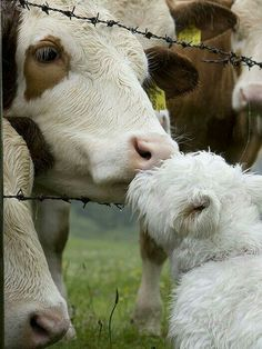 Why is one confined to a certain unnatural death while the other roams free and enjoys love and compassion? GO VEGAN