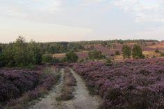 Hart van Hellendoorn - Wandelen over de paarse heide