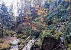 Wanderung durch die Wolfsschlucht | Die Speckalmrunde Wolf, Places, Travel, Outdoor, Wanderlust, Viajes, Other, Projects, Lawn And Garden