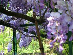 Monet's Garden at Giverny