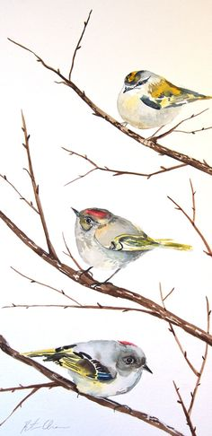 "Watercolor Painting, Original, Bird Painting, Kinglets, 9""x17.5"""
