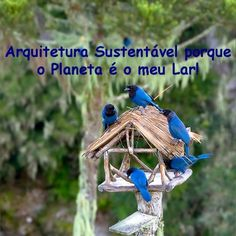 arquisust1
