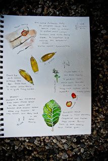 Living Charlotte Mason in California: Our Nature Journals Lately
