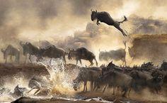 25 photos d'animaux sauvages époustouflantes - photos d'animaux
