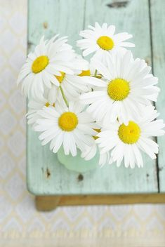 Daisies. ♡..... i think daisies are just the happiest flower, don't you?