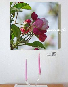 Apfelblütenknospe, Baumblüte, FOTO von GIMOOTO, Motiv gedruckt auf Satin Canvas Leinwand