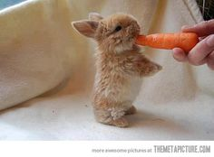The Tiniest Bunny I Ever Saw!!!