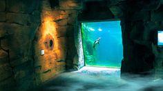 Zoo am meer Bild 4