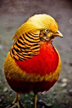 "500px / Photo ""angry bird."" by Alex B."