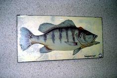 Placa Decorativa 28x14cm * Tucunaré Azul * Imagem Art - R$ 20,00 em Mercado…