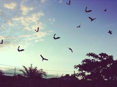 Foto tirada do céu no fim de tarde.