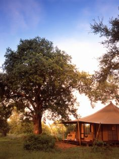 Stay at Ngala Tented Camp ,the romance of canvas combined with simple sophistication  http://www.africanwelcome.com/kruger-national-park/private-game-lodges-timbavati-kruger-national-park/and-beyond-ngala-tented-camp-kruger-national-park
