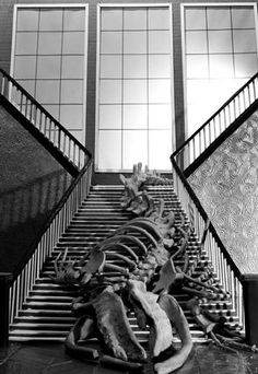 """Robin Crookall's """"Whale Skeleton on Staircase"""" is a spooky piece."""
