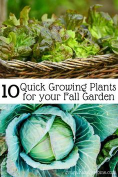 Did you know you can plant vegetables in the garden for a fall harvest? I know I…