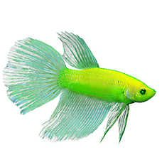Pet Fish For Sale Tropical And Freshwater Fish Petsmart In 2020