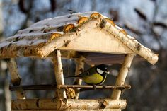 Vogelfutter: Tipps zur Winterfütterung heimischer Vögel
