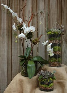 proflowers succulents