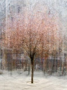 tree portraits are composed of multiple photographs, shot as he circles the subject