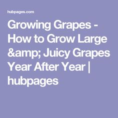 Growing Grapes - How to Grow Large & Juicy Grapes Year After Year | hubpages