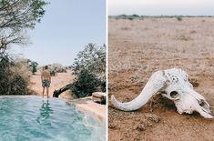 Phinda with the Rosies - Hooray Weddings South Africa Safari, African Safari, Honeymoon Destinations, The Fresh, I Fall In Love, Instagram Feed, Serenity, Trust, Wanderlust