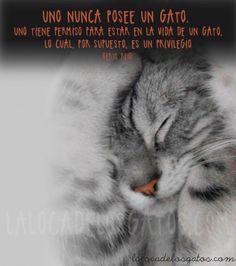 cita-gatos-poseer