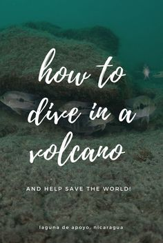 HOW TO DIVE IN A VOLCANO AND HELP SAVE THE WORLD -  laguna de apoyo nicaragua!  volcano experiment science , adventure travel explore dreams nature, crazy scuba diving ideas, nicaragua travel things to do, PADI scuba diving, volcano diving, volunteer in Nicaragua, scuba diving photography underwater, laguna de apoyo nicaragua, Nicaragua underwater.   ☆☆ Travel Guide / Bucket List Ideas Before I Die By #Inspiredbymaps ☆☆