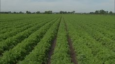 'Monsanto Protection Act' slips silently through US Congress Supreme Court, Agriculture, Vineyard, Acting, Seeds, America, Garden, Nature, Blog