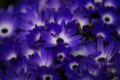 Blue-violet by Yayoi Takeda