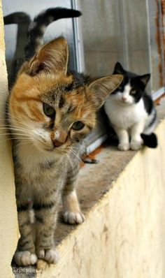 Hello??...yes, you are the kitty, I'm looking for...