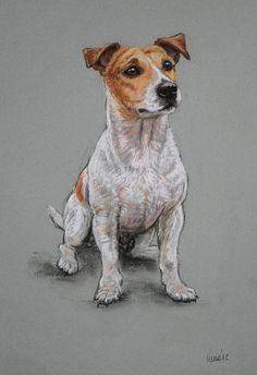 Original soft pastel Jack Russell Terrier dog art by Terrierzs Perros Jack Russell, Chien Jack Russel, Jack Russell Dogs, Jack Russell Terrier, Art Actuel, Art Sur Toile, Face Sketch, Dog Cards, Art Drawings Sketches