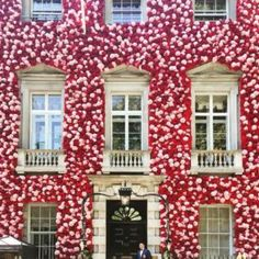 Stay away if you have hayfever 😂 London is in full bloom this week for Chelsea Flower Show! Is this the prettiest flower facade you've seen? Chelsea Flower Show, Orange Rosen, Unique Restaurants, Vogue Living, Annual Flowers, World Of Interiors, Architecture, Design Projects, Fairy Lights