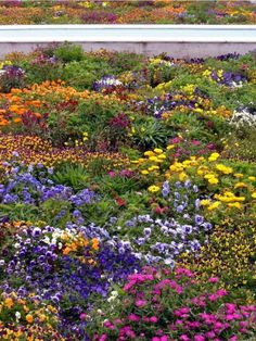 Colourful+Flowers+In+Garden | Indian garden flowers with full of bright colorful flowers.JPG