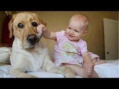 Lustige Videos Zum Totlachen 2016 - Witzige Videos Teil 14 - YouTube