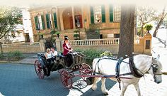 #ridecolorfully beside horse-drawn carriages in Savannah, GA