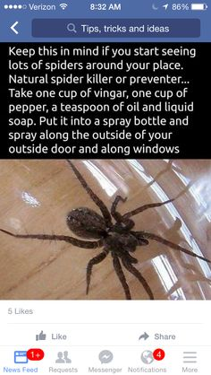 As far as possible, this post will concentrate on pest control tips that would assist keep away as much pests as you can. Some of the advises provided here will deal on specific pests but some may … Household Cleaning Tips, House Cleaning Tips, Cleaning Hacks, Simple Life Hacks, Useful Life Hacks, Natural Spider Repellant, Spider Killer, Diy Pest Control, Bug Control