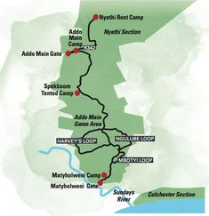 There are over 600 elephants in Addo Elephant National Park. We created a self-drive route (doable in a sedan) to see the best big animals in the park. Addo National Park, National Parks Map, Spotted Animals, Big Animals, Feel Good Pictures, Buy A Kitten, Elephant Park, Munchkin Cat, Self Driving