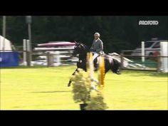 Viscount Youngster-Tour in Isernhagen 2016 - YouTube