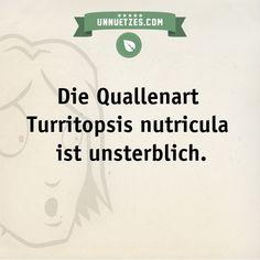 So überlebt die Qualle: http://www.unnuetzes.com/wissen/9154/qualle/