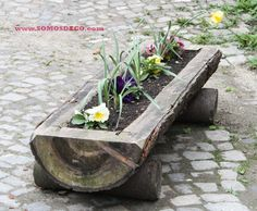 Una jardinera hecha con un tronco /  A planter made from a log