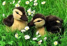 Gorgeous like-like Ducklings by Kosen.