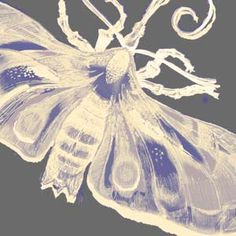 Another Timorous Beasties goodie, with the xray print moth in an excellent on trend colour scheme.