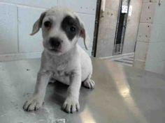 www.PetHarbor.com pet:SBCT.A480003